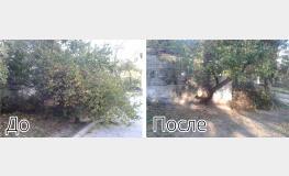Утилизация и вывоз ветвей аварийного дерева в пгт. Грэсовском